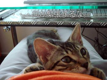 DB_20070904_02.jpg