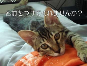 DB_20070904_04.jpg