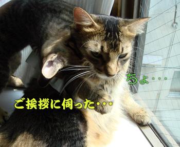 DB_20070906_05.jpg