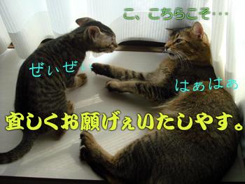 DB_20070906_09.jpg