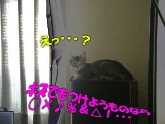 delilah_20060701_03.jpg
