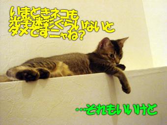 delilah_20060703_03.jpg