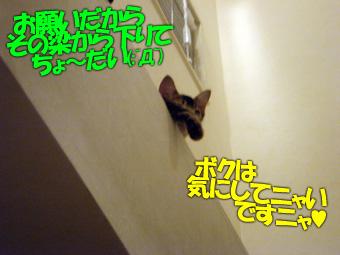 delilah_20060703_04.jpg