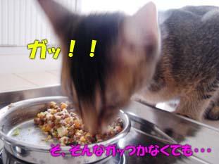 delilah_20060704_03.jpg