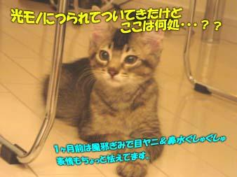 delilah_20060705_04.jpg