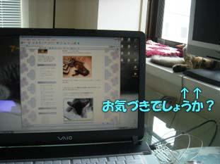 delilah_20060711_01.jpg