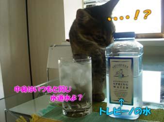 delilah_20060712_03.jpg