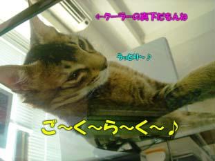 delilah_20060714_04.jpg