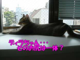 delilah_20060717_02.jpg