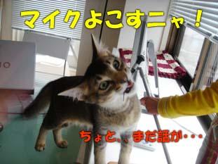 delilah_20060724_03.jpg