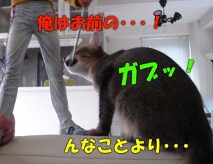 delilah_20060724_04.jpg