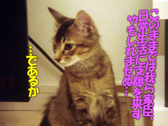 delilah_20060725_02.jpg