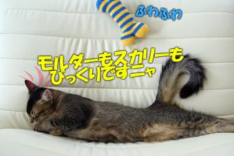 delilah_20060726_04.jpg