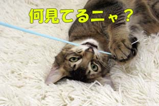 delilah_20060804_04.jpg