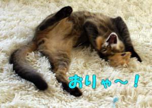 delilah_20060806_04.jpg