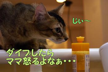 delilah_20060824_04.jpg