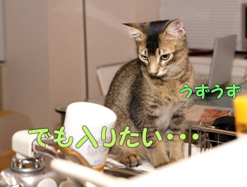 delilah_20060824_05.jpg