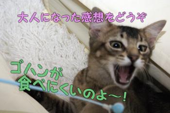delilah_20060828_04.jpg