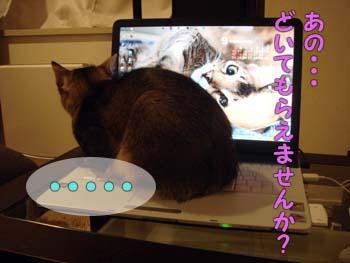 delilah_20060920_02.jpg