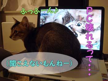 delilah_20060920_03.jpg