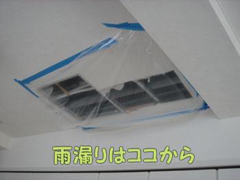 delilah_20060923_03.jpg
