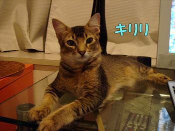 delilah_20061003_01.jpg