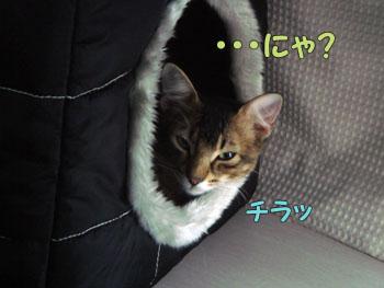 delilah_20061005_02.jpg