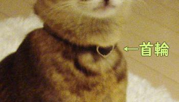 delilah_20061007_03.jpg