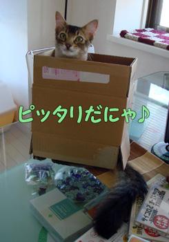 delilah_20061010_02.jpg
