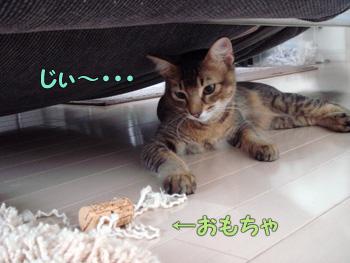 delilah_20061015_02.jpg