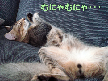 delilah_20061019_02.jpg