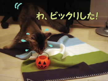 delilah_20061026_03.jpg