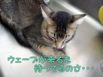delilah_20061028_03.jpg