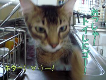 delilah_20061028_04.jpg