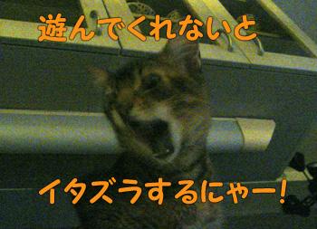 delilah_20061101_04.jpg