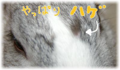 imgp9628(2).jpg