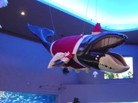 74鳥羽水族館クジラサンタ
