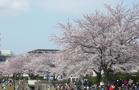 sakura_20110413205907.jpg