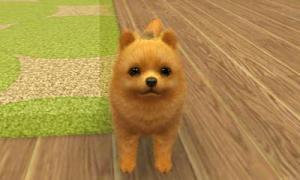 dogs003.jpg