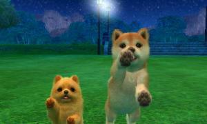 dogs006.jpg