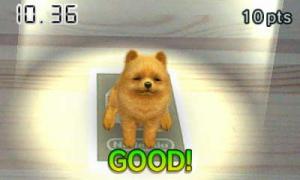 dogs019.jpg