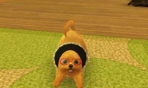 dogs0368.jpg