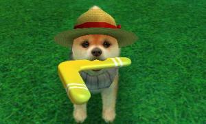 dogs0374.jpg
