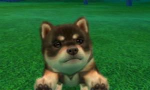 dogs0375.jpg
