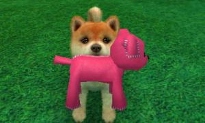 dogs0378.jpg