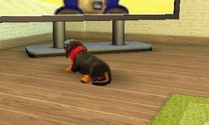 dogs0386.jpg