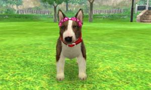 dogs0390.jpg