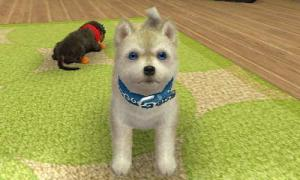 dogs0400.jpg