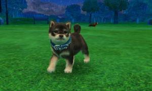 dogs0408.jpg