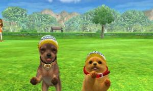 dogs0429.jpg